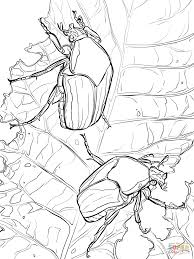 beetles coloring pages free coloring pages