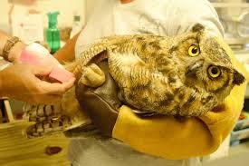 i have an injured bird ohio bird sanctuary