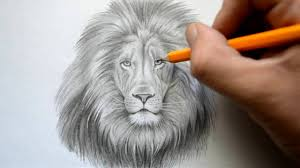 lapse drawing lion