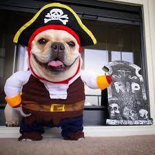 Halloween Costumes Dogs 25 Dog Pirate Costume Ideas Yoda Dog Costume