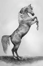 rearing horse drawing pencil drawings of horses rearing wip