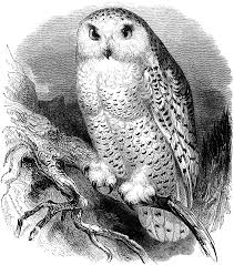 free clip art snow owl vintage illustration oh so nifty