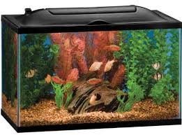 Aquarium Decor Ideas The Best 10 Gallon Fish Tanks And Kits 2017