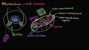 structure of a cell biology science khan academy