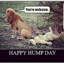 Happy Hump Day Memes - you re welcome happy hump day hump day meme on me me
