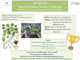 Challenge Water How To 2017 Water Chestnut Chasers Challenge New York Imapinvasives