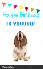 happy birthday singing basset hound looking up and singing text happy birthday to you on a