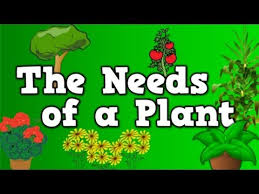 Most Popular Things For Kids The Needs Of A Plant Song For Kids About 5 Things Plants Need To