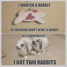 Funny Bunny Memes - eliminate your fears and doubts about i want a rabbit i