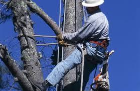 what does a tree climber get paid chron com