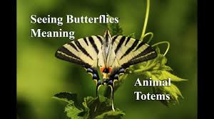 the meaning of seeing butterflies totems