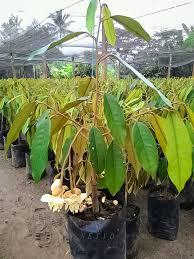 tropical fruit hunters personal