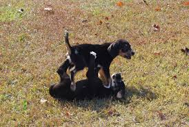 three adorable pups from wv s
