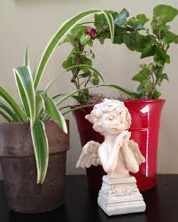 easy flowers to grow indoors houseplant care 8 keys to success hgtv