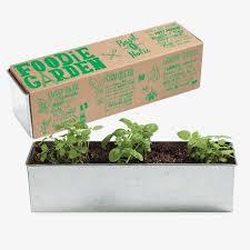 Indoor Herb Garden Kit Basil O Holic Foodie Garden Seed Growing Kit Givingplants Com