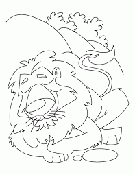 coloring pages lions kids coloring