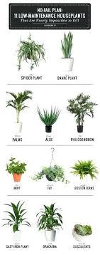 best plants for bedroom best plants to keep in bedroom clockwise snake plant rubber tree