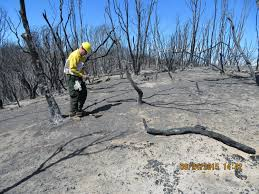 California Wildfire Database by Supported Tool Is Accelerating Wildfire Recovery