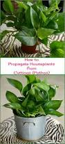 best 25 easy plants to grow ideas on pinterest plants indoor