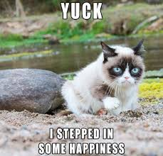 Ugly Cat Meme - ideal 178 best grumpy cat images on pinterest testing testing