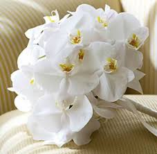 white orchids 31 best white orchid wedding images on marriage white