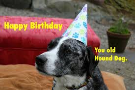 Birthday Meme Dog - dog party happy birthday blue dog homemade meme