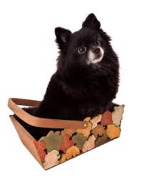puppy thanksgiving thanksgiving week is here houston pettalk