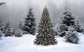 unthinkable snow covered christmas trees simple ideas 7ft flocked