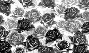 black roses my black roses wall mural photo wallpaper photowall