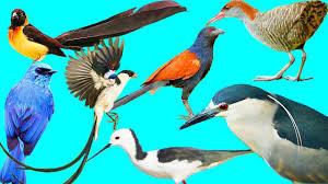 wild birds list of the bird species 3 youtube