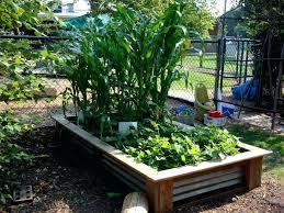 Garden Layouts For Vegetables Raised Vegetable Garden Beds Layout Vegetable Garden Layout