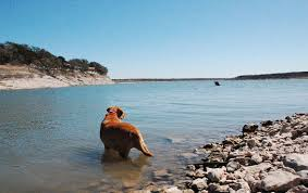 10 Tips For Taking Your by 10 Tips For Taking Your Dog Swimming In A Lake Or River