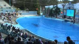 San Diego Six Flags 4 8 2009 Shouka The Killer Whale Show Six Flag Vallejo Youtube