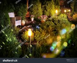 net christmas lights for small bushes illuminated home garden patio plants evening stock photo royalty