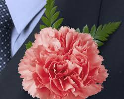 Carnations In Bulk Pink Carnation Boutonniere Carnation Boutonniere Canada