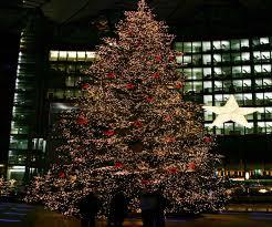 real christmas trees for sale perth christmas lights decoration