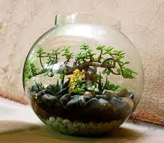 Inside Home Plants by Plants Inside Glass 8654