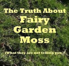 indoor mini gardens the mini garden guru from twogreenthumbs com