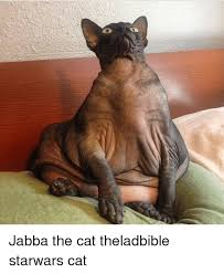 Star Wars Cat Meme - jabba the cat theladbible starwars cat meme on me me