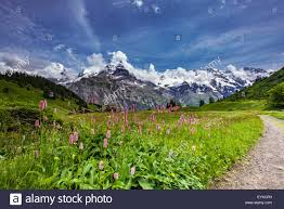 mountain backdrop swiss alpine with mountain backdrop stock photo 86017977