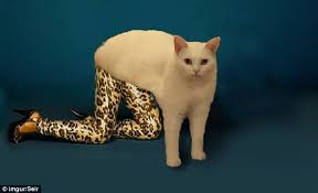Cat Sitting Meme - photoshopped pictures of a white cat sitting awkwardly sweep the
