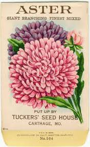 flower seed packets jb vintage flower seed packet tuckers seed house lithograph
