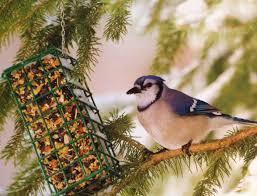 2014 great backyard bird count wells brothers pet lawn u0026 garden