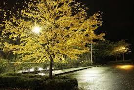 Landscape Lighting Trees Landscape Lighting For Trees Home Guides Sf Gate
