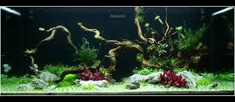 idee deco aquarium créer son décor d aquarium comment réaliser un aquarium aquascape