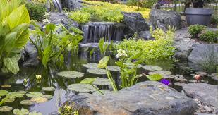 small plants for small ponds natural impressions