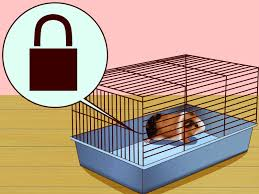 Cages For Guinea Pigs How To Hold A Guinea Pig With Pictures Wikihow