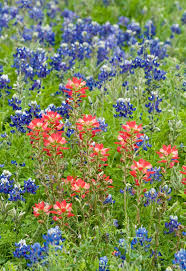 austin native plants 53 best austin