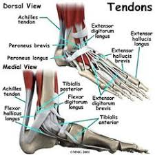 Foot Anatomy Nerves Plantar Foot Anatomy Nerves Fa07 Nclex Prep And Study Resource