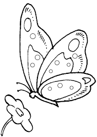 free butterfly colouring pages butterfly free embroidery